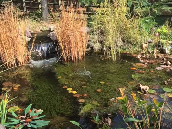 Before fall pond maintenance